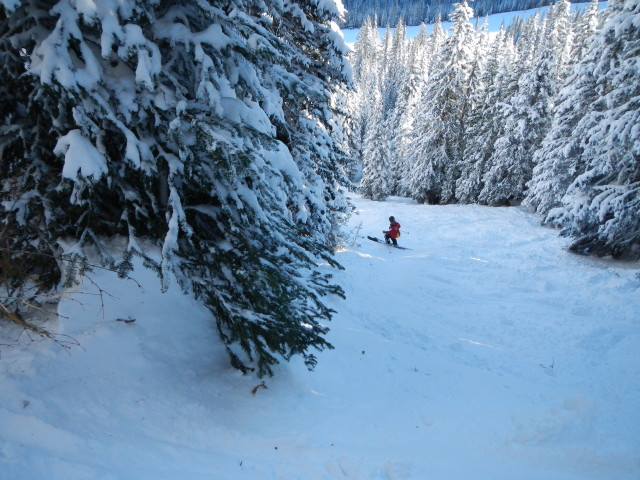 <b>Figure 5:</b> Avalanche debris ran into this open park and stopped along the wall of spruce trees (below the skier in the image). (<a href=javascript:void(0); onClick=win=window.open('https://avalanche.state.co.us/caic/media/full/acc_432_1948.jpg','caic_media','resizable=1,height=820,width=840,scrollbars=yes');win.focus();return false;>see full sized image</a>)