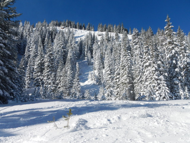 <b>Figure 6:</b> Looking up the path from the well defined bench where debris stopped (just out of view). Skier 1 was 100 to 150 vertical feet below the prominent rock at the ridgeline. The highest portion of the crown was a short distance below the rim and to lookers left of the rock. (<a href=javascript:void(0); onClick=win=window.open('https://avalanche.state.co.us/caic/media/full/acc_432_1949.jpg','caic_media','resizable=1,height=820,width=840,scrollbars=yes');win.focus();return false;>see full sized image</a>)