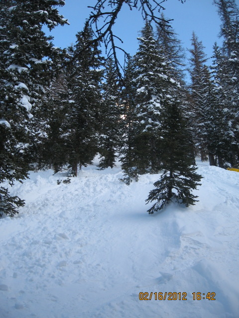<b>Figure 6:</b> Looking up the avalanche. The avalanche swept Skier 2 through these trees. (<a href=javascript:void(0); onClick=win=window.open('https://avalanche.state.co.us/caic/media/full/acc_444_2831.jpg','caic_media','resizable=1,height=820,width=840,scrollbars=yes');win.focus();return false;>see full sized image</a>)