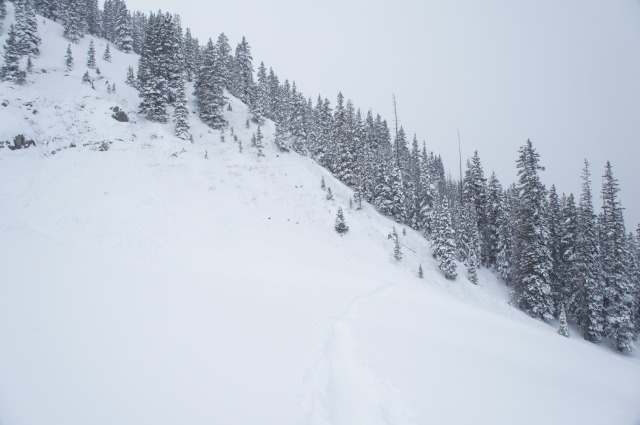 <b>Figure 7:</b> This photo is looking back towards the path. Rider 1 was heading towards the slight opening in the timber just below the dead snag without branches. Rider 1 was caught just above the perfect &quot;Christmas tree&quot; just below the very large spruce tree. Rider 1 was carried just to the lower right hand edge of this image. (<a href=javascript:void(0); onClick=win=window.open('https://avalanche.state.co.us/caic/media/full/acc_484_3967.jpg','caic_media','resizable=1,height=820,width=840,scrollbars=yes');win.focus();return false;>see full sized image</a>)