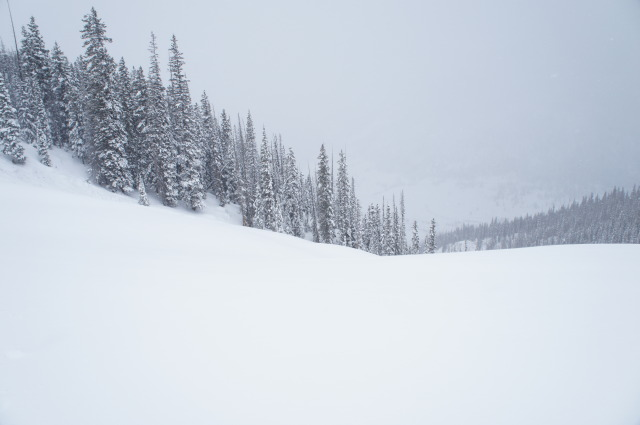 <b>Figure 8:</b> This image shows the extent of Rider 1's ride in the avalanche. Rider 1 was caught just uphill of the &quot;Christmas Tree&quot; and was carried down to just above the lower clearing into the forest. (<a href=javascript:void(0); onClick=win=window.open('https://avalanche.state.co.us/caic/media/full/acc_484_3968.jpg','caic_media','resizable=1,height=820,width=840,scrollbars=yes');win.focus();return false;>see full sized image</a>)