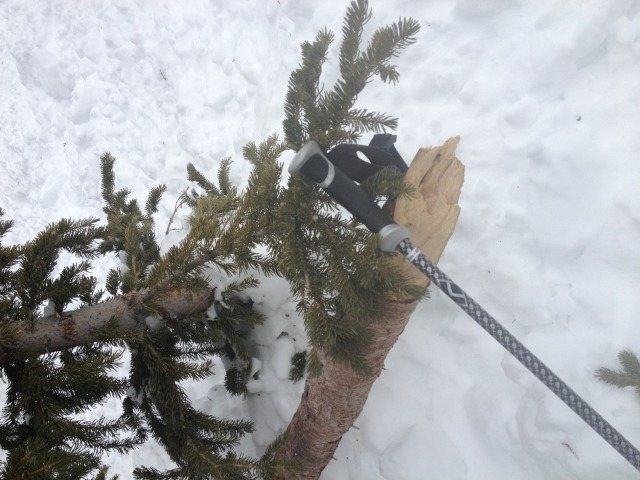 <b>Figure 4:</b> A tree broken in the avalanche. (<a href=javascript:void(0); onClick=win=window.open('https://avalanche.state.co.us/caic/media/full/acc_497_4515.jpg','caic_media','resizable=1,height=820,width=840,scrollbars=yes');win.focus();return false;>see full sized image</a>)