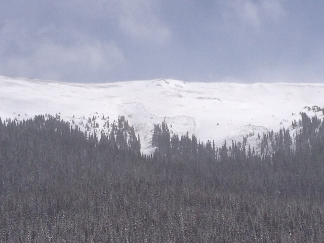 <b>Figure 17:</b> Several deep persistent slab avalanches ran naturally in Straight Creek April 18th. These avalanches released on north-facing, near-treeline slopes less than 4 miles away from Sheep Creek. (<a href=javascript:void(0); onClick=win=window.open('http://avalanche.state.co.us/caic/media/full/acc_505_5141.jpg','caic_media','resizable=1,height=820,width=840,scrollbars=yes');win.focus();return false;>see full sized image</a>)