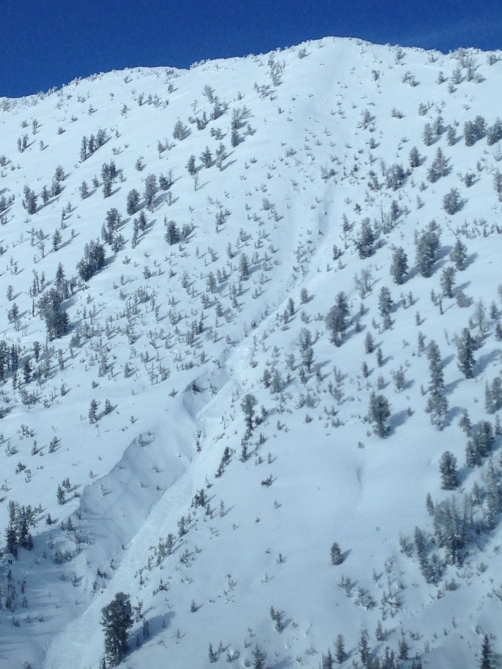 <b>Figure 2:</b> The avalanche ran into the gully. (<a href=javascript:void(0); onClick=win=window.open('http://avalanche.state.co.us/caic/media/full/acc_525_7359.jpg','caic_media','resizable=1,height=820,width=840,scrollbars=yes');win.focus();return false;>see full sized image</a>)