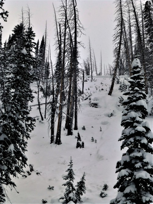 <b>Figure 5:</b> This avalanche resulted in a fatality on Henderson Bench outside of Cooke City. The slope had a northeast aspect and was 250 vertical feet. The slide failed on a layer of facets over an ice crust three feet below the surface. The victim was strained through trees and likely died of trauma. The slope is longer and steeper than it appears in the photograph. Photo GNFAC (<a href=javascript:void(0); onClick=win=window.open('http://avalanche.state.co.us/caic/media/full/acc_618_13870.jpg','caic_media','resizable=1,height=820,width=840,scrollbars=yes');win.focus();return false;>see full sized image</a>)