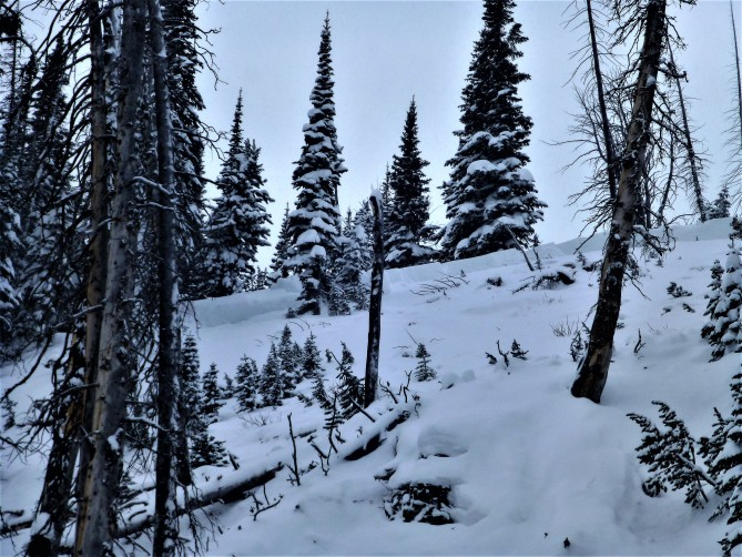 <b>Figure 6:</b> The crown of the fatal avalanche on Henderson Bench was 80 feet wide at the top of the slope and 150 feet wide at its widest point. It was 3 feet deep with a cassification of SS-AS-R4-D2. Photo GNFAC (<a href=javascript:void(0); onClick=win=window.open('http://avalanche.state.co.us/caic/media/full/acc_618_13871.jpg','caic_media','resizable=1,height=820,width=840,scrollbars=yes');win.focus();return false;>see full sized image</a>)