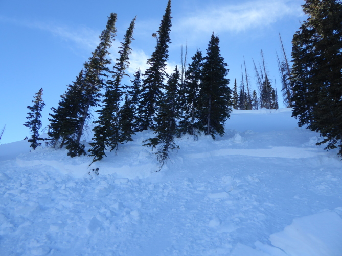 <b>Figure 9:</b> Looking up at a stand of trees near the top of the avalanche. You can see two separate fracture lines along each set of trees in the image. (<a href=javascript:void(0); onClick=win=window.open('https://avalanche.state.co.us/caic/media/full/acc_631_15693.jpg','caic_media','resizable=1,height=820,width=840,scrollbars=yes');win.focus();return false;>see full sized image</a>)