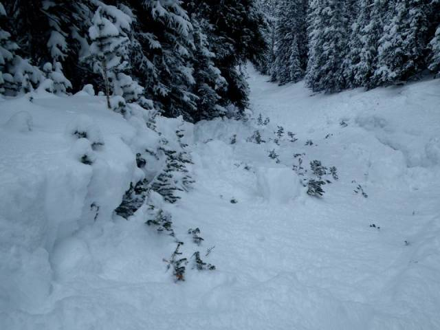 <b>Figure 3:</b> Looking down larger of the R1D1s below treeline. Note crown zippering along small trees. Debris pile up 3-4 feet deep (<a href=javascript:void(0); onClick=win=window.open('https://avalanche.state.co.us/caic/media/full/obs_15441_3313.jpg','caic_media','resizable=1,height=820,width=840,scrollbars=yes');win.focus();return false;>see full sized image</a>)