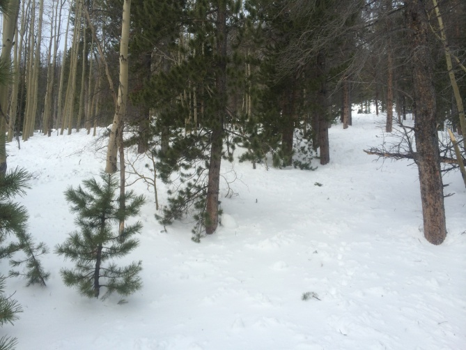 <b>Figure 3:</b> Looking up the Trail after the Mason Town Flat Spot.  Debris covering the trail. (<a href=javascript:void(0); onClick=win=window.open('https://avalanche.state.co.us/caic/media/full/obs_23092_6892.jpg','caic_media','resizable=1,height=820,width=840,scrollbars=yes');win.focus();return false;>see full sized image</a>)