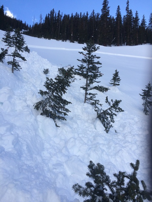 <b>Figure 3:</b> Debris from a remotely-triggered slide that ran into funnel of small trees and down slope for 300' then stopped. a larger slide may have continued much further downhill at the same pitch. 2-4-17. (<a href=javascript:void(0); onClick=win=window.open('http://avalanche.state.co.us/caic/media/full/obs_45250_15324.jpg','caic_media','resizable=1,height=820,width=840,scrollbars=yes');win.focus();return false;>see full sized image</a>)
