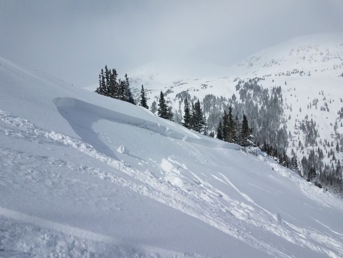 <b>Figure 5:</b> Crown of a skier triggered avalanche in Dry Gulch 11/4/2018. Areas like this small wind-loaded slope are the most dangerous right now. (<a href=javascript:void(0); onClick=win=window.open('https://avalanche.state.co.us/caic/media/full/obs_51724_20945.jpeg','caic_media','resizable=1,height=820,width=840,scrollbars=yes');win.focus();return false;>see full sized image</a>)